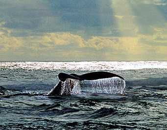 Discovery Tours: Whale Tours West Coast